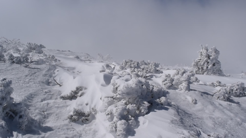Plants, trees and rocks in mountains covered with snow creating a beautiful decoration.