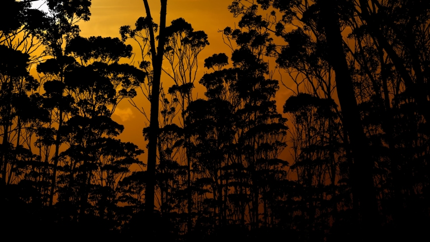 Amazon Rainforest on Fire, Amazonia Jungle at Sunset, Time Lapse with Red Sun and Dark Silhouette of Trees | Shutterstock HD Video #1042934701