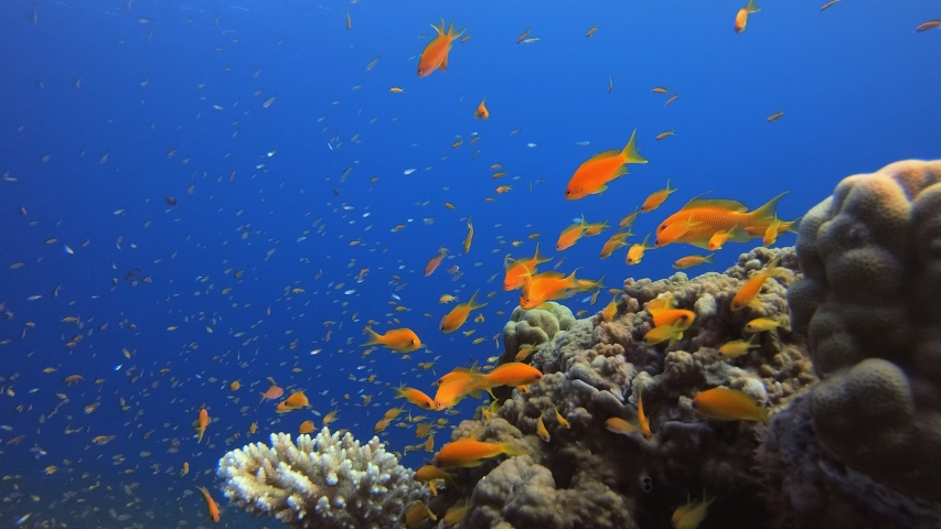 Underwater Background Tropical Ambience. Tropical underwater sea fishes. Underwater fish reef marine.