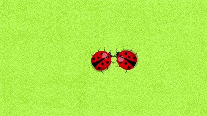 Ladybugs run on a green background, meet and breed. 2D vector animated picture.