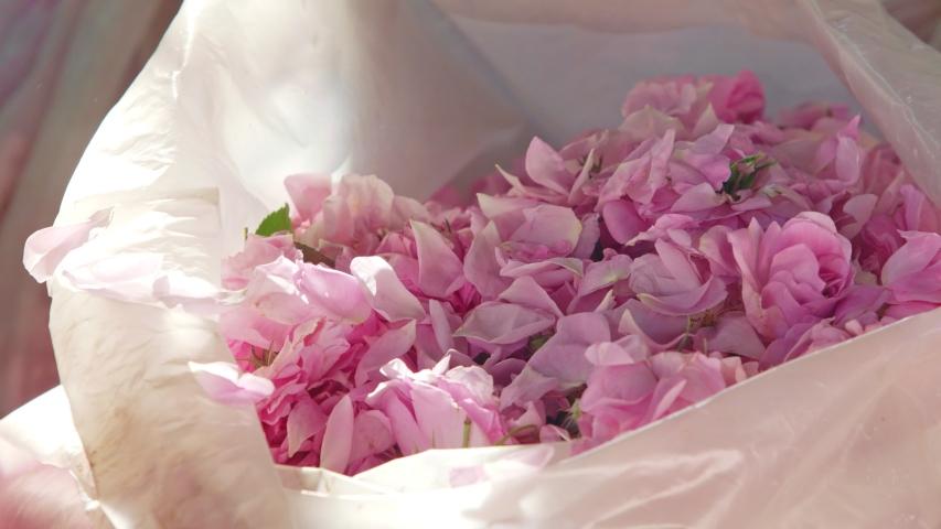 Girl Taking Pink Rose Petals Stock Footage Video (100% Royalty-free)  1043251975 | Shutterstock