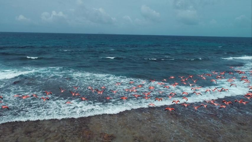 Flamingos flying in the caribbean beach. Animal scene.
