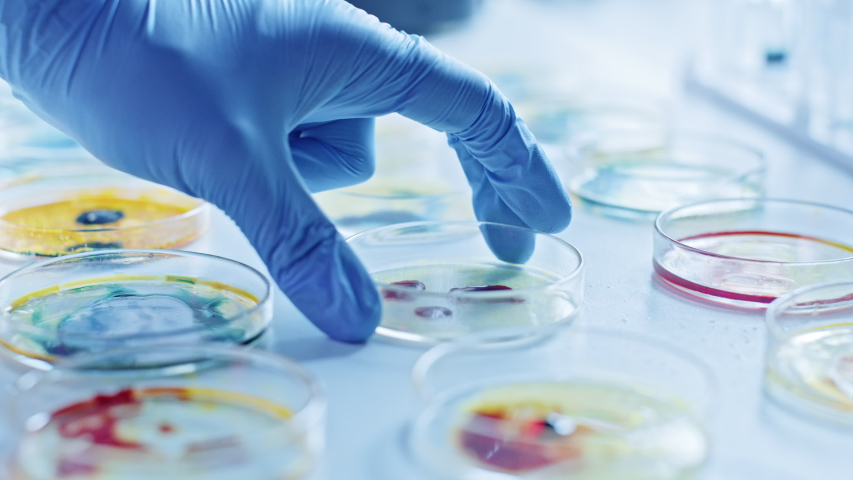 Microbiology Laboratory: Scientist Works with Petri Dishes with Various Bacteria, Tissue and Blood Samples. Concept of Pharmaceutical Research for Antibiotics, Curing Disease with DNA Enhancing Drugs