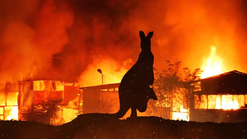 Kangaroo On Hill Caught In The Austalian Wildfire | Shutterstock HD Video #1044280474