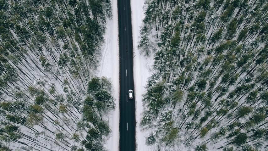 AERIAL pursuit, chase, chasing shoot view : silver white car driving down an asphalt road crossing the vast forest on a winter day. drive through the idyllic woods in picturesque. Green Forest in snow