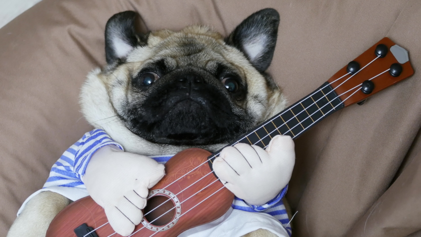 Lazy funny pug dog singer with a guitar, dog musician guitarist lies on his back on a soft chair bag, looking at the camera | Shutterstock HD Video #1044505972