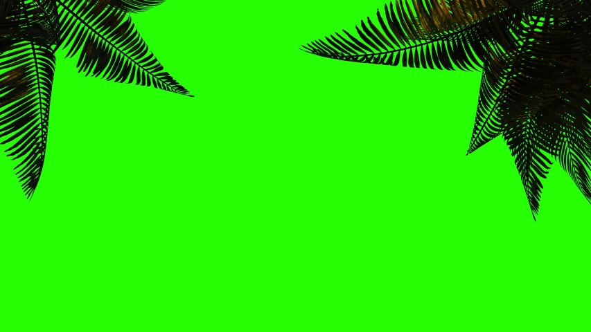 Animated palm branch and leaves in the wind on a green background.  Keying, green background on green screen.