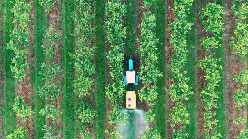 Farming tractor spraying on apple garden with sprayer, herbicides and pesticides. Spraying chemical insecticide or fertilizers to blooming apple trees, agricultural spring works. Aerial view, top view Royalty-Free Stock Footage #1044587317