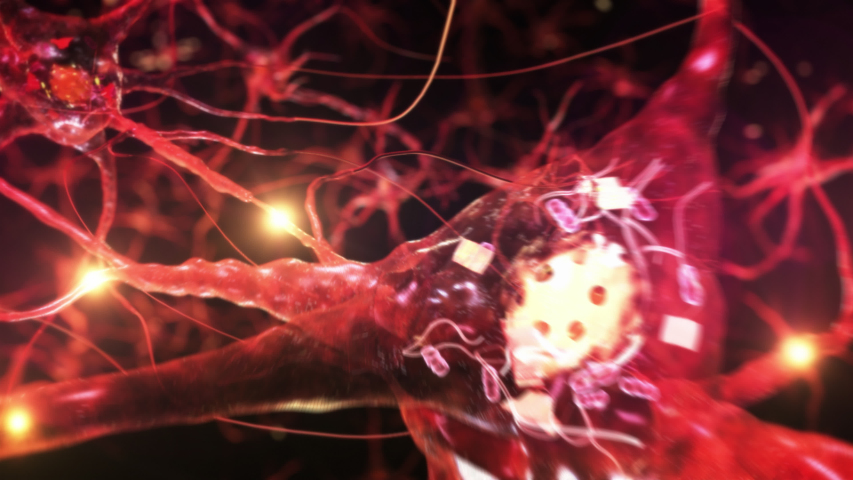 Animation of neuron cells with glowing links. Synapse. Journey through a colorful network of nerve cells with impulses passing by. Loopable. | Shutterstock HD Video #1044591799