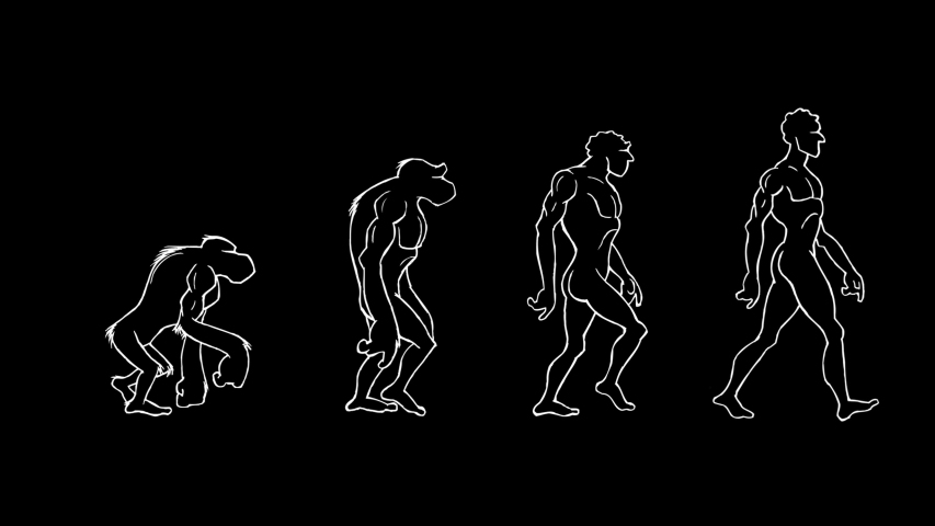 Human Evolution. Monkey, Neanderthal, Primate and Homo Sapiens walking. Hand drawing animation. Black background. Loopable.
