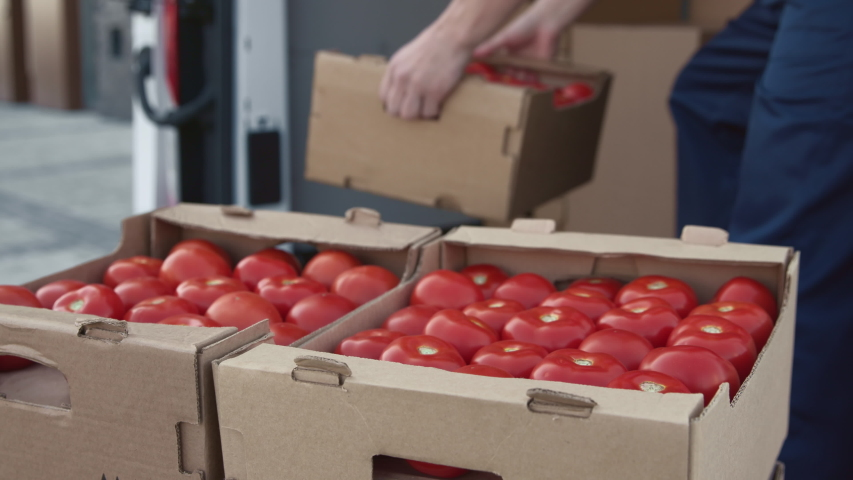 Transportation of Food on Truck. Shipment Order of Foodstuff from Industrial Warehouse for Sale. Worker Carries and Sorts Boxes of Tomato for Supplier. Concept of Transfer Company or Carriage on Lorry