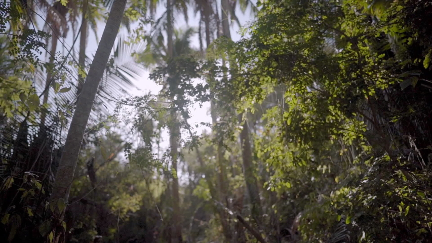 POV walking through jungle forest as sun peeks through trees in Mexico | Shutterstock HD Video #1044687643
