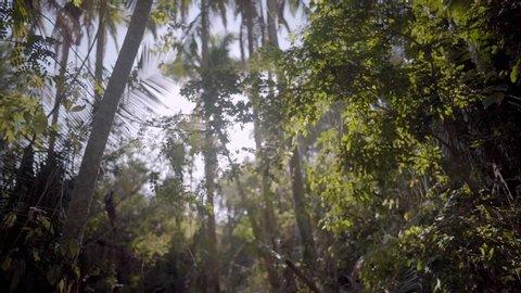 POV walking through jungle forest as sun peeks through trees in Mexico