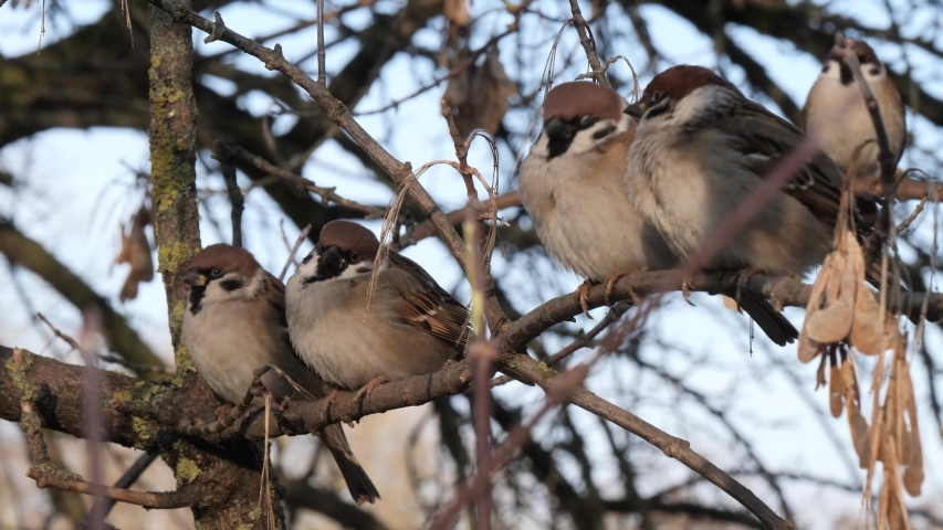 Sparrows are sitting on a tree branch | Shutterstock HD Video #1044717964