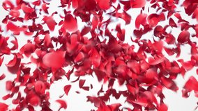 Flower petals explosion. 3D realistic animation of many petals explosion like confetti with alpha matte.