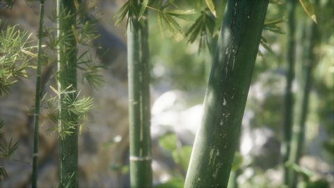 Green Bamboo trees forest background. Shallow DOF