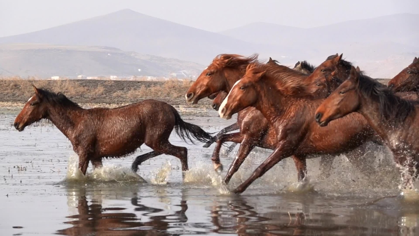 Wild Horses running slow motion | Shutterstock HD Video #1045042513