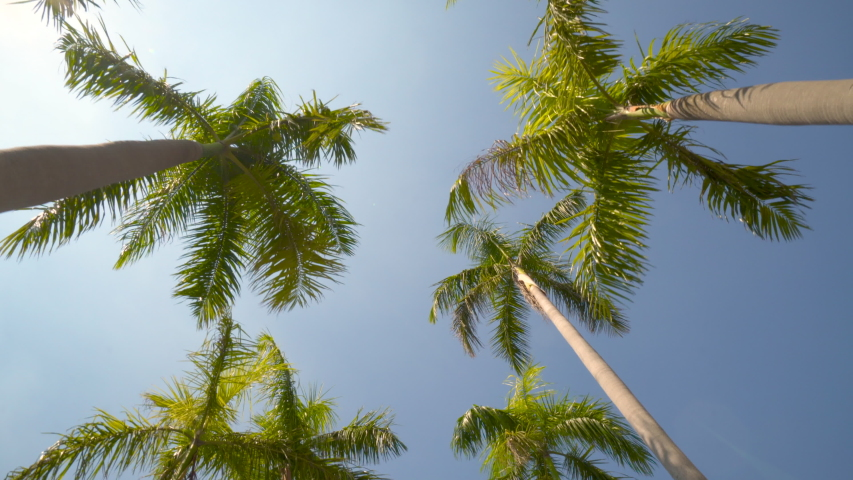 View of the Palm Trees Passing by Under Sunny Blue Skies. Wide Shot of Driving with Camera Looking up at Palm Trees in 4K format POV Tropical Vacation