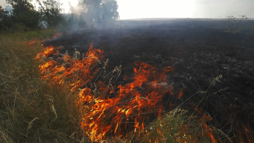 Close up view of wildfire, spreading flames of forest fire. Natural disaster, climate change, global worming. Fire, wildfire, burning grass field in the smoke and flames. Earth concept #1045235026