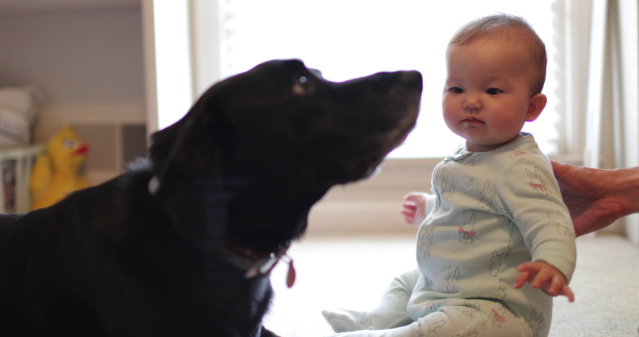 Sweet dog licks cute baby on her face | Shutterstock HD Video #1045342813