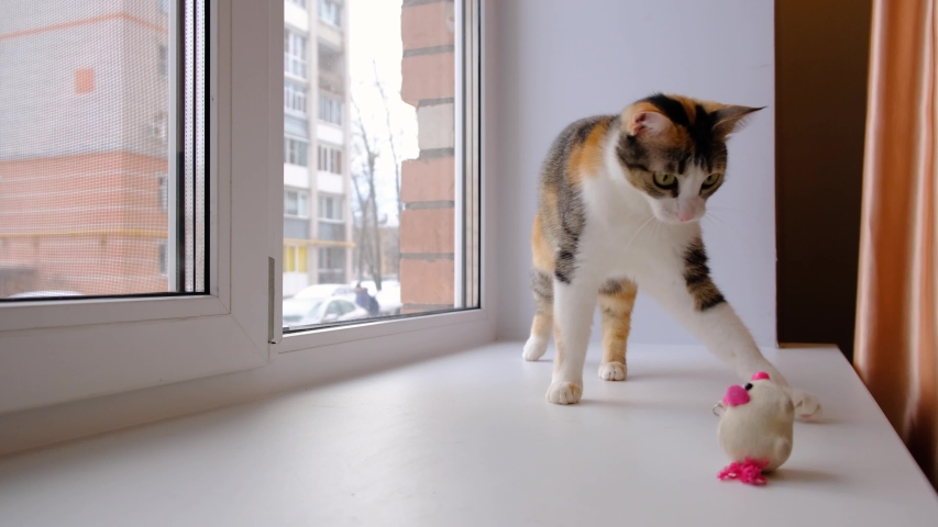 Cute cat playing with a small soft toy on the windowsill. Tricolor cat. 4k footage. Royalty-Free Stock Footage #1045425511