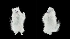Dog Dance CG fur 3d rendering animal realistic composition, 3d mapping, cartoon, Animation Loop, Included in the end of the clip with Alpha matte.