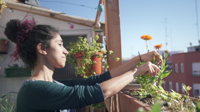 Cutting flowers in garden with scissors | Shutterstock HD Video #1045742926