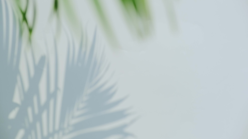 Close up silhouette shadow of palm leaves motion by natural wind on white wall background.