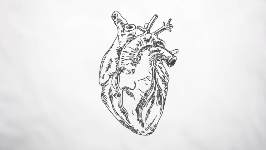A traditional and minimal style animation of a heart pumping in loop