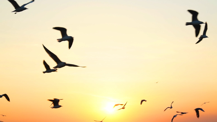 Seagull bird flying slow motion with sunset.