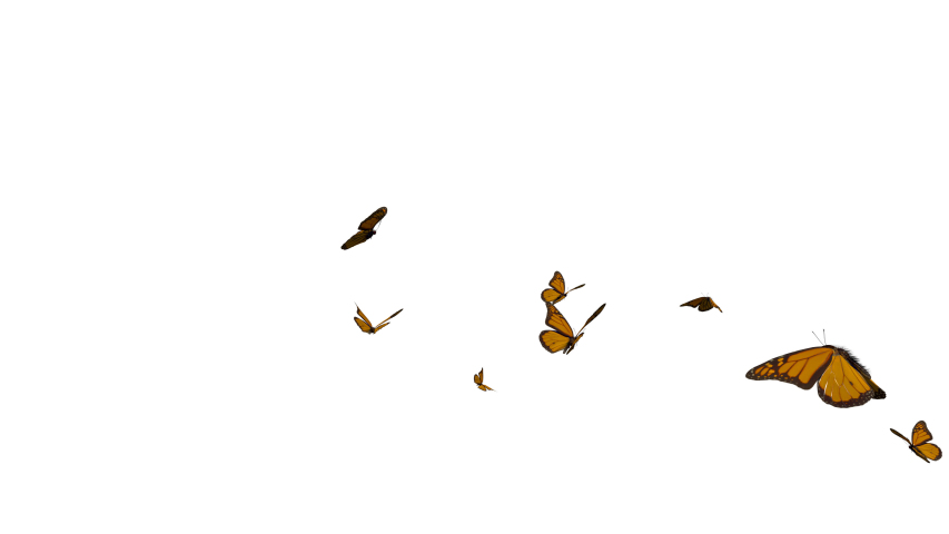Monarch butterflies flying from left to right on white and black background. 3D rendering(Alpha mate)