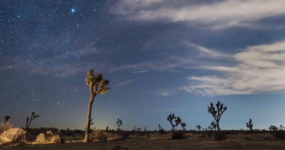 Time lapse of stars in night sky behind Joshua Trees, Mojave desert