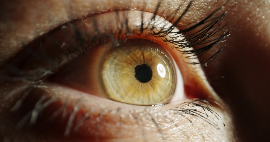 Extreme close up shot of female eye with makeup and dark green or brown iris looking around and blinking 4k footage