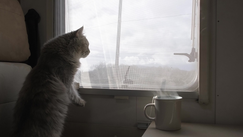 The home-made furry cat on the windowsill looks out the window. The motorhome. Camper. Rv. Van. A wild animal.  Royalty-Free Stock Footage #1046226223