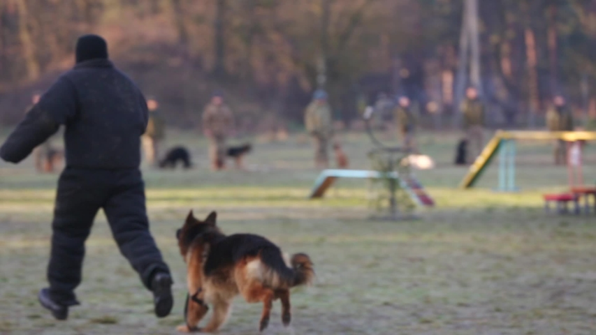 Blurred focus. Soldiers training dog to attack in a field. Demonstration performance of police dogs, shepherd dogs, service dogs, service smart dogs, dog breeding, danger of attack.