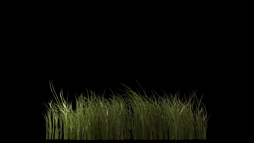 Beautiful 4k panorama grass seamless loop,  blowing on the wind, isolated on black with alpha channel, perfect for film, digital composition, projection mapping | Shutterstock HD Video #1046426740
