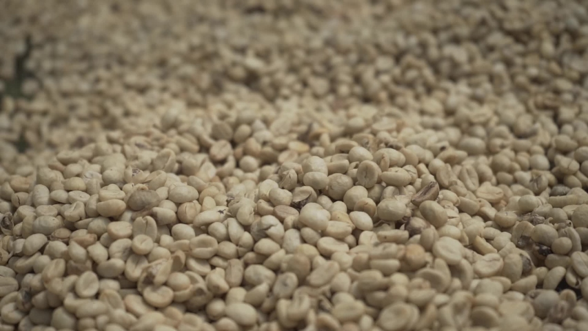 Close up to coffee grains  | Shutterstock HD Video #1046604889