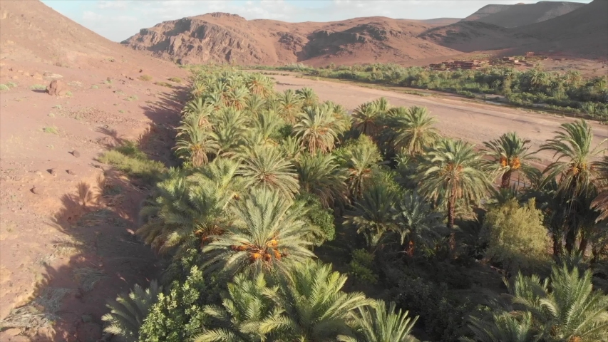 Oasis next to dust road in dry landscape of Africa, Morocco
