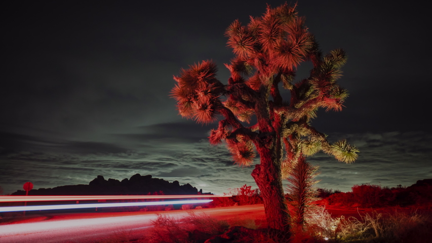 Time lapse of car light trails along highway in Joshua Tree National Park