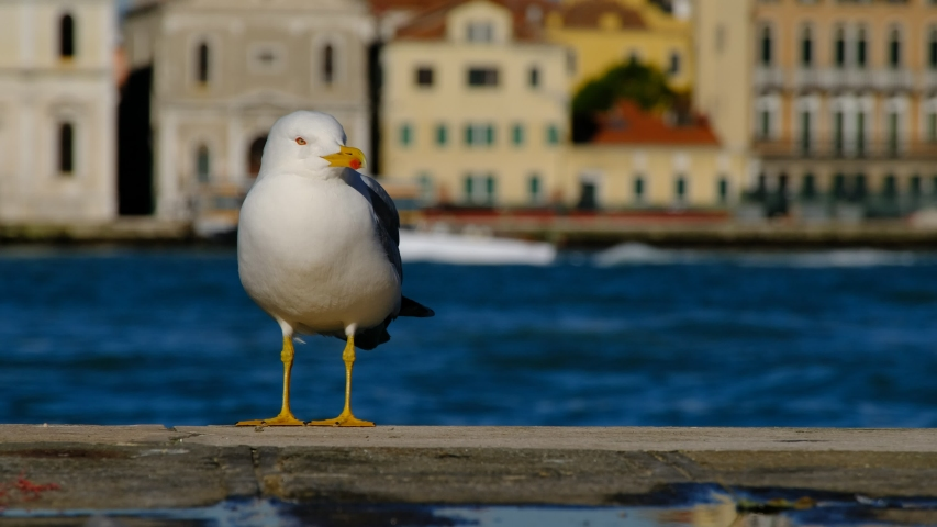 A seagull standing on the quay | Shutterstock HD Video #1046862835