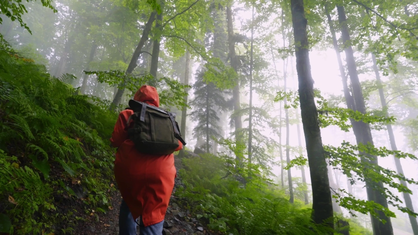 Traveller woman walking in forest in rainy day. Following from the bak girl in orange raincoat with backpack walk through the foggy forest with fern leaves. Enjoying nature and happy life, adventure.