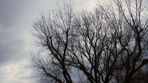 treetop moving in winter storm