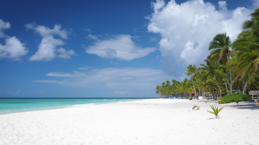Coconut palm trees on white sandy beach on caribbean island. Travel destinations. Summer vacations   Shutterstock HD Video #1047051478