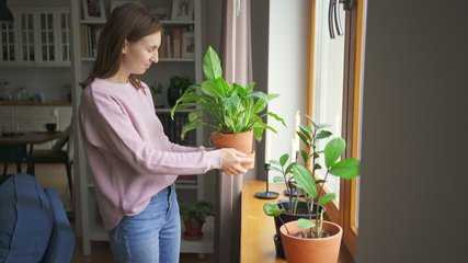 Young woman puts plants on a windowsill in her trendy city apartment. Girl decorates the apartment. Creates comfort at home. 4k