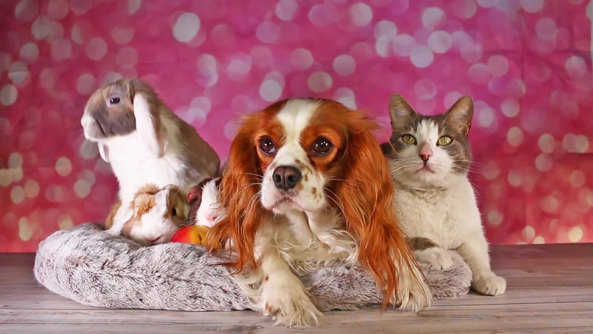 Unexpected friendships Animal Pet Friends Cute Animals Together Dog Cat Lop Rabbit Loves Each Other