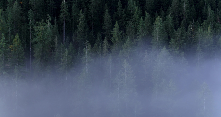 Drone Fly Through The Fog Forest Reveal, Pacific north west Inspire 2 old growth forest. BC Canada wilderness river. Fly above the clouds nanaimo. Nature wildlife stunning breathing calm