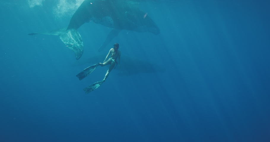 Beautiful woman freediving with humpback whales in deep blue ocean water, amazing tropical vacation swimming with whales
