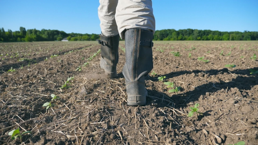 Follow to male farmer's feet in boots walking through the small green sprouts of sunflower on the field. Legs of young man stepping on the dry soil at the meadow. Low angle view Close up Slow motion   Shutterstock HD Video #1047359809