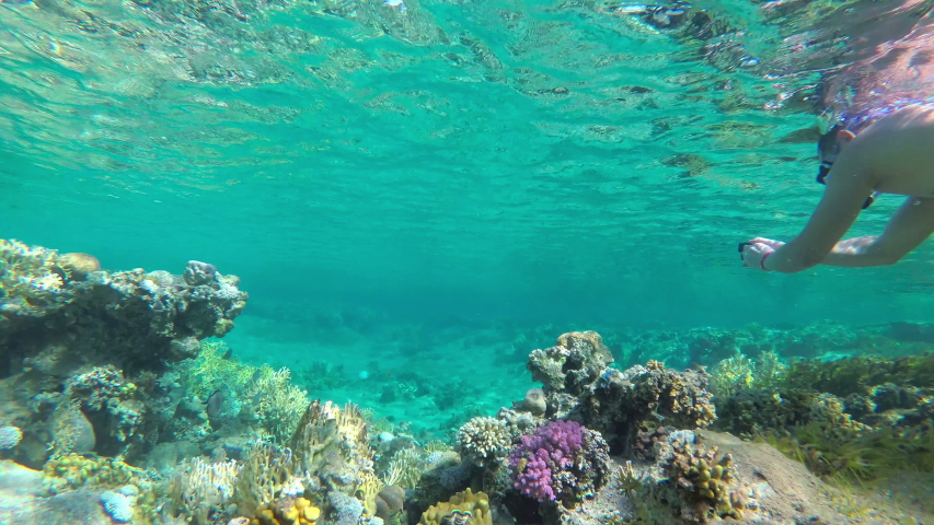 Beautiful coral reef and  snorkeling | Shutterstock HD Video #1047406102