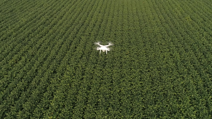 Smart agriculture drone flying over agriculture in the field of innovation and technology. Royalty-Free Stock Footage #1047412330